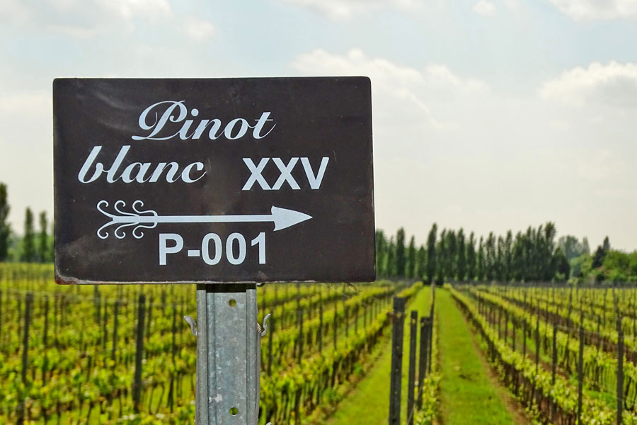 Pinot-blanc-is-a-great-wine-that-goes-well-with-crab-cakes