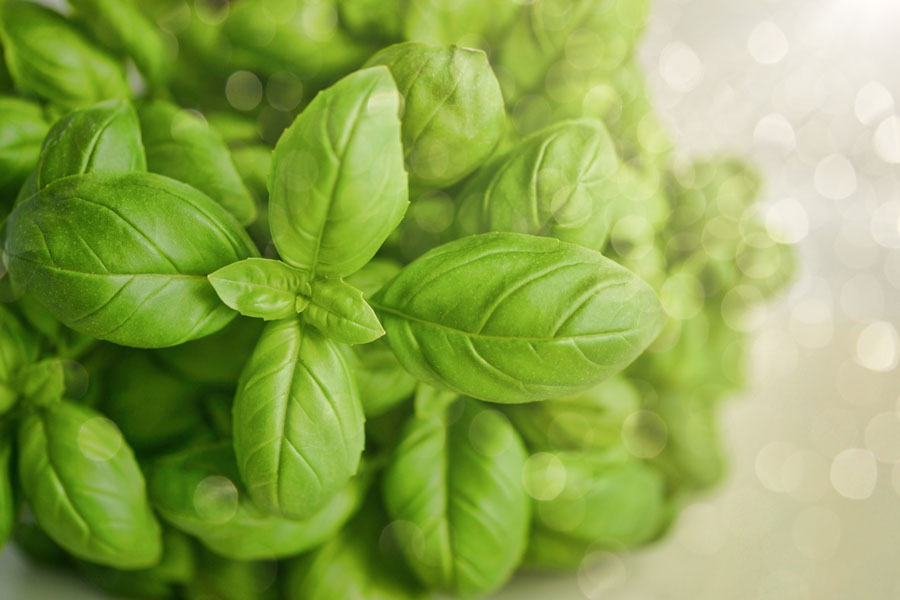 basil as a substitute for bay leaves