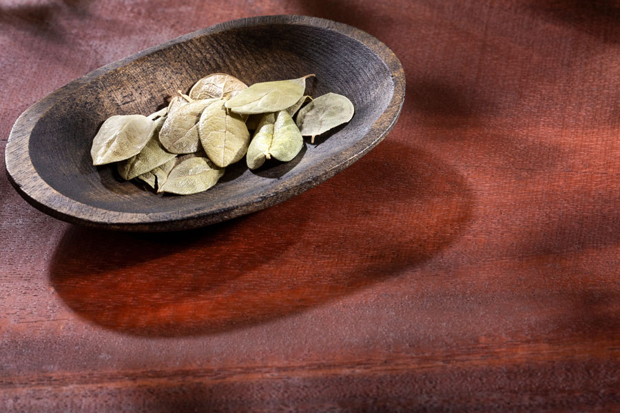 boldo leaves as a substitute for bay leaves