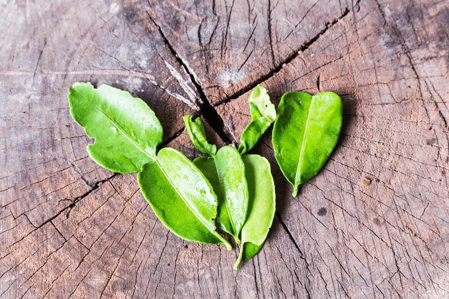 Kaffir-lime-leaves-as-a-substitute-for-curry-leaves