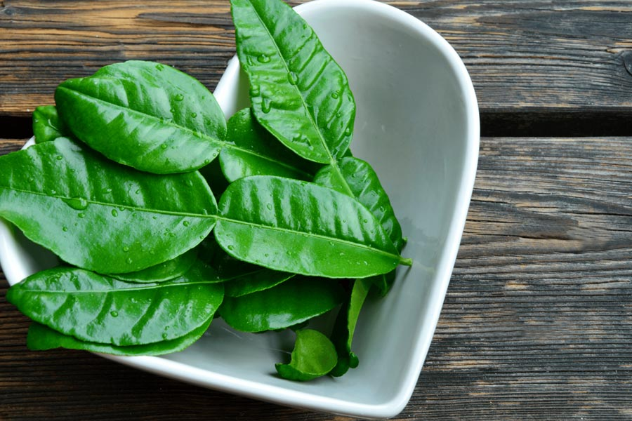 Lime-leaves-as-a-substitute-for-curry-leaves