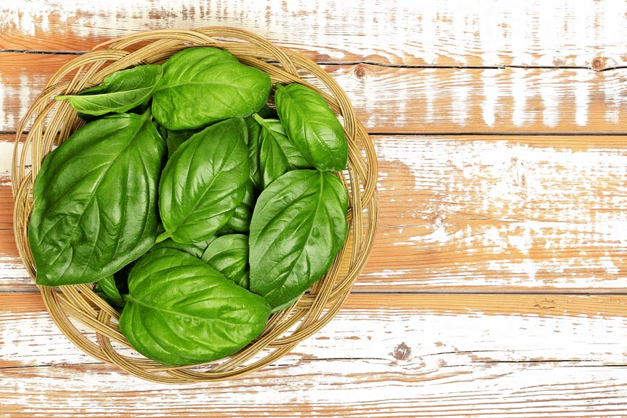 basil-leaves-as-a-substitute-for-curry-leaves